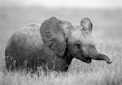 禁止食用野生动物可否入法