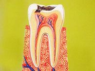 牙髓自体移植形成骨基质
