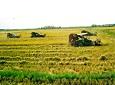 """国家发改委:耕地休养生息对粮食减产影响""""可控"""""""
